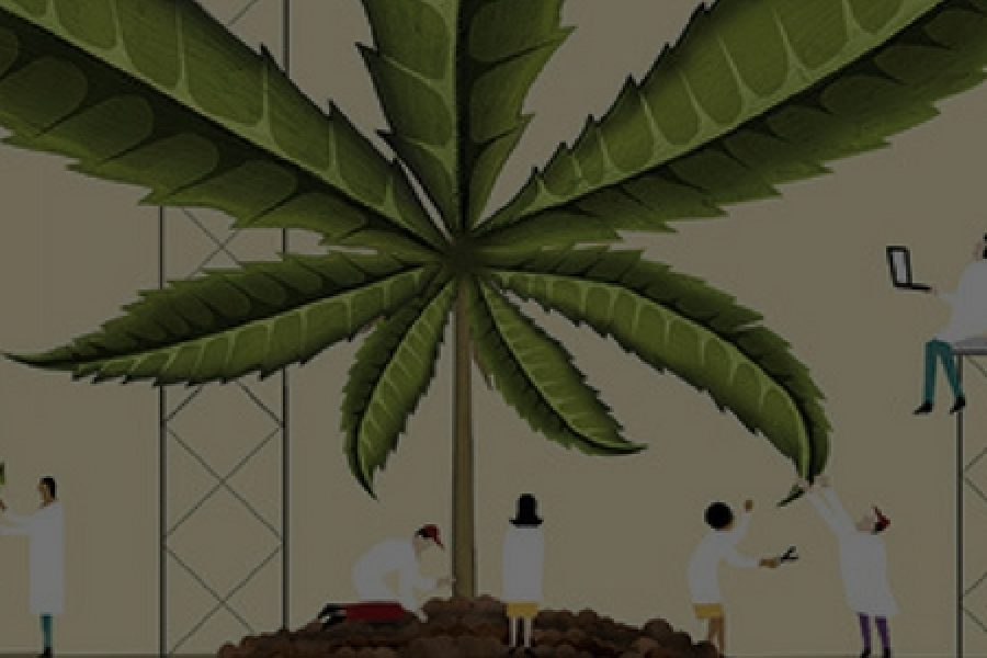Cannabis Market Research & Trends for 2017