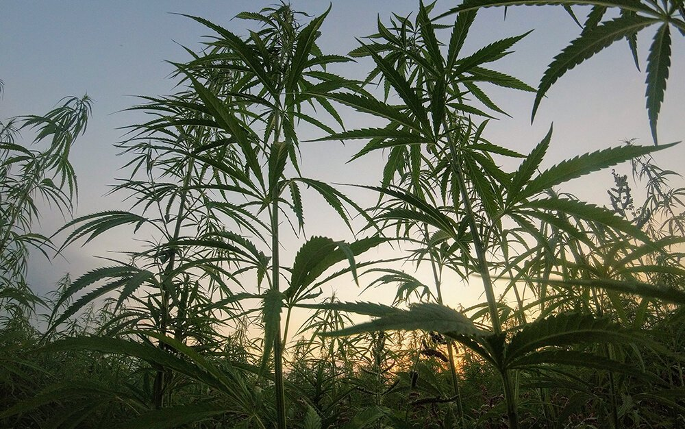 hemp derived cbd not a controlled substance 1