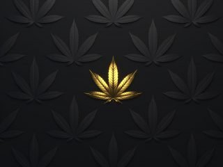 The Insiders Guide to Specialty Cannabis Branding