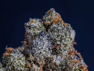 We tested the 10 best CBD flower strains and this is what we found